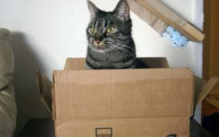Почему кошки прячутся в коробки. Коробка – музыкальный инструмент. Любовь к замкнутому пространству