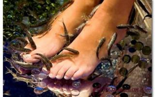 Рыбки которые чистят кожу. Рыбки для пилинга