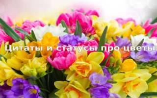 Статус про цветы в саду. Цитаты о цветах