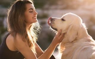 Демонстрация любви у собак или почему собака лижет человека. Собака лижет хозяина: причины