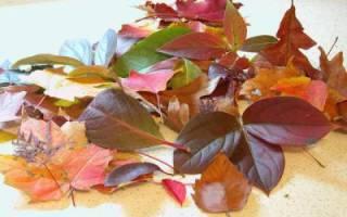 Цветы из листьев деревьев своими руками: инструкции. Цветы из листьев деревьев своими руками: мастер-класс с фото пошагово