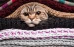 Как очистить мебель от шерсти животных. Как очистить одежду и мебель от кошачьей шерсти