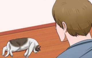 Симптомы и методы лечения инсульта у кошек. Инсульт у кошек и котов: симптомы и лечение