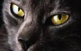 Как написать рассказ о кошке. Приметы, связанные с кошкой. С точки зрения науки
