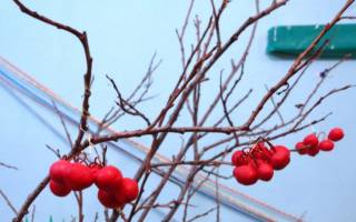 Поделка из ягод рябины своими руками. Ветка рябины своими руками. Мастер-класс с пошаговыми фото. Варенье из рябины с яблоками или грушами