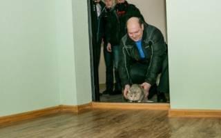 Кот прячется не ест и не пьет. Основные причины, почему кот не ест, и пути решения проблемы. Почему кот ничего не ест, сильно похудел и ослабел: лечение и симптомы. Что делать, если кошка не ест