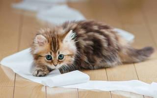 У кошки или кота недержание мочи: что делать? Затрудненное (болезненное) мочеиспускание у кота — странгурия. Основные причины, терапия