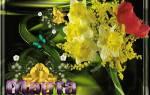 Женский день 8 марта история праздника. Интересные факты, связанные с празднованием женского дня. Что можно предпринять