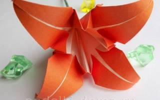 Как сделать объемную лилию из бумаги. Как сделать лилию из бумаги: пошаговый мастер-класс