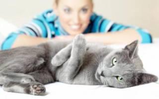 Почему у кота понос. Лечение кошки от поноса в домашних условиях. Лечение диареи у кошек