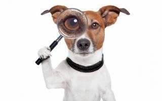 Как научить взрослую собаку ходить рядом. Как научить собаку команде Рядом!»: советы кинологов»