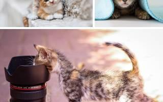 Люди любящие кошек психология. Признаки проявления кошачьей любви. Люди с высоким уровнем стресса