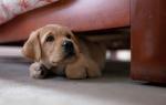 Советы психолога в воспитании собак. Воспитываем щенка зарабатыванием еды. Некоторые собаки боятся громких звуков, например, грома или петард