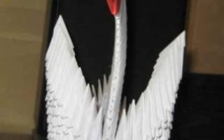 Белый лебедь из модулей оригами пошаговая инструкция. Лебедь оригами из бумаги: несколько пошаговых мастер-классов