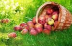 Яблочный спас: история праздника и традиции. Яблочный спас – история праздника и традиции
