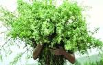 Какие травы полезны для лица. Лосьоны и тоники. Это нужно знать при омоложении травами