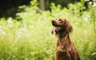 Помогите! Пропала собака! Что делать если потерялась собака? Что делать, если потерялась собака